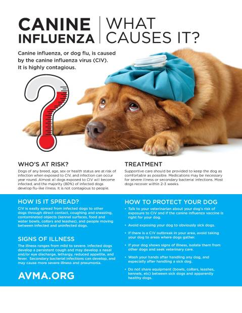 Canine Influenza Facts