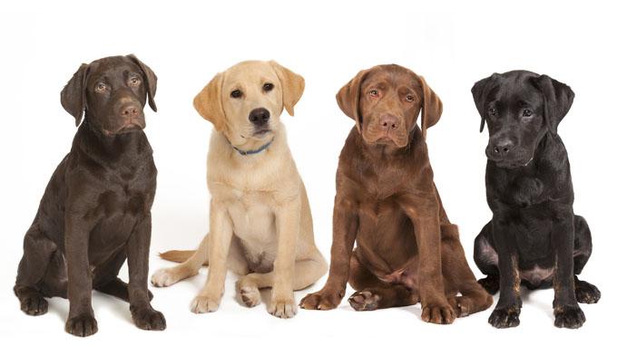 Top Dog Breed photo